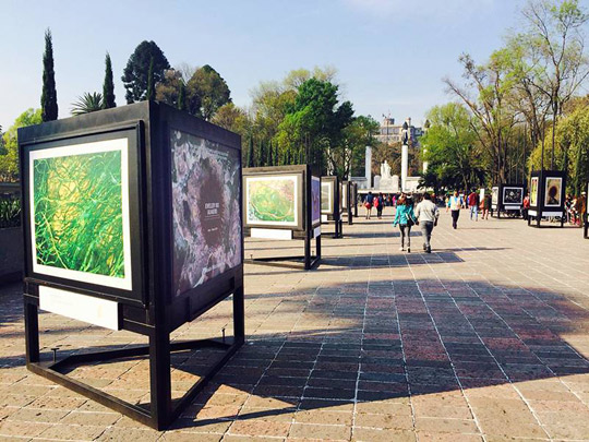 The exhibition of photographs by Irish photographer Daragh Muldowney in the Chapultepec Park.